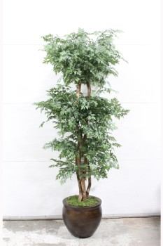 Plant, Fake, FAKE, MING ARALIA TREE, APPROX 6 FT, BROWN PLANTER , PLASTIC, GREEN