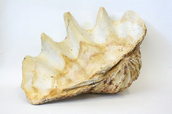 Science/Nature, Shell, LIGHTWEIGHT FAKE CLAM SHELL, PLASTER, OFFWHITE