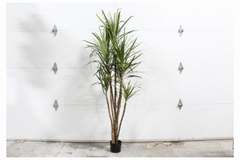 Plant, Fake, FAKE PALM,APPROX 7', PLASTIC, GREEN