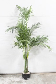 Plant, Fake, FAKE PALM TREE,APPROX. 7' (THICKEST TO 6'), BLACK PLASTIC PLANTER, PLASTIC, GREEN