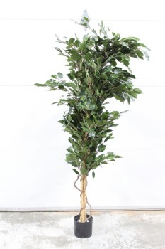 Plant, Fake, FAKE TREE,SHORT LEAVES,TWISTED STEM, APPROX 6', PLASTIC, GREEN