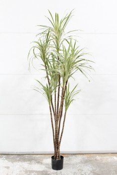 Plant, Fake, FAKE PALM,LONG NARROW LIGHT & DARK GREEN LEAVES, APPROX 7', PLASTIC, GREEN