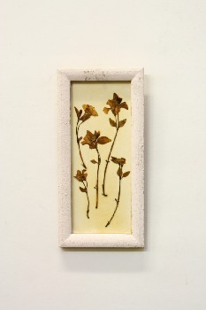 Wall Dec, Misc, CLEARABLE,DRIED FLOWERS IN RECTANGULAR WHITE FRAME, WOOD, MULTI-COLORED