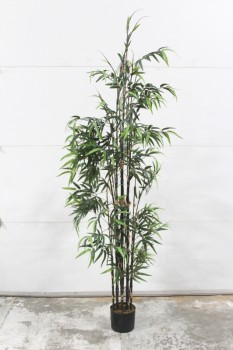 Plant, Fake, FAKE BLACK BAMBOO,APPROX 7', SMALL PLASTIC POT , PLASTIC, GREEN