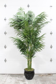 Plant, Fake, 9FT XL FAKE BUTTERFLY PALM, BLACK PLANTER - *Must Be Returned With All Branches*, PLASTIC, GREEN