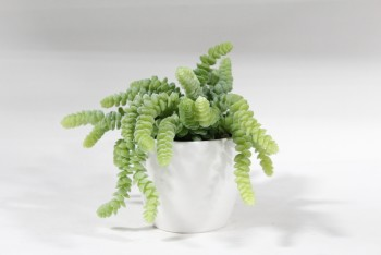 Plant, Fake, SMALL FAKE DONKEY TAIL SUCCULENT IN WHITE CERAMIC POT , PLASTIC, GREEN