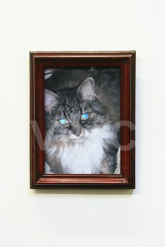 Art, Photo, CLEARED,CAT W/BLUE EYES,DARK TABLETOP FRAME, WOOD, MULTI-COLORED