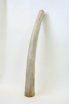 Taxidermy, Tusk, LONG FAKE HORN/TUSK , WOOD, OFFWHITE