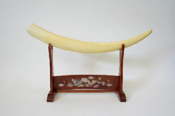 Taxidermy, Tusk, ON WOODEN STAND (14.5