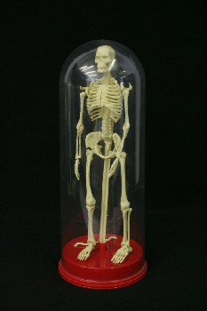 Medical, Model, SKELETON, MODEL, RED BASE, PLASTIC DOME, DETACHABLE BONES, PLASTIC, OFFWHITE