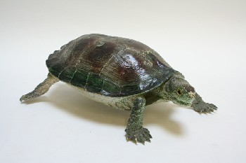 Taxidermy, Reptile, REEVES TURTLE W/BROWN PATCHES ON BACK, PLASTIC, GREEN