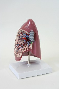 Medical, Model, 1 PC. MODEL OF LUNG, WHITE BASE, PLASTIC, PINK