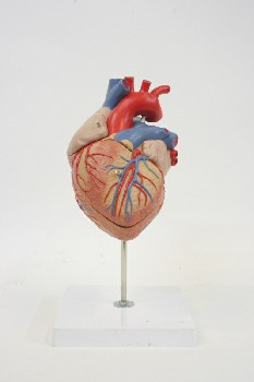 Medical, Model, HEART MODEL ON WHITE SQ BASE,1 REMOVEABLE PIECE, PLASTIC, MULTI-COLORED