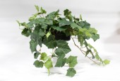 Plant, Fake, SMALL FAKE CASCADING GRAPE IVY PLANT IN BLACK PLASTIC CONTAINER , PLASTIC, GREEN